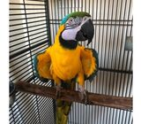 Macaws and Gray