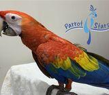 Rare Scarlett Macaw For Sale